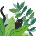Livre Petits et grands de la jungle